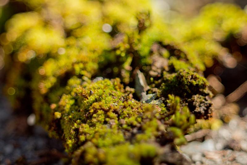 Moss on the Tree 24