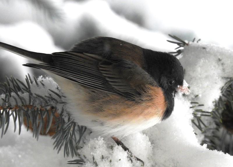 birds (225).JPG