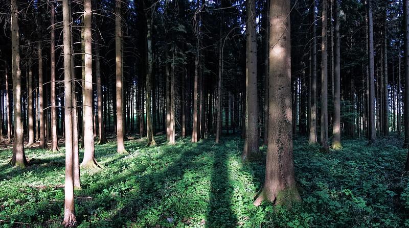 Wald | Forest, Mettmenstetten