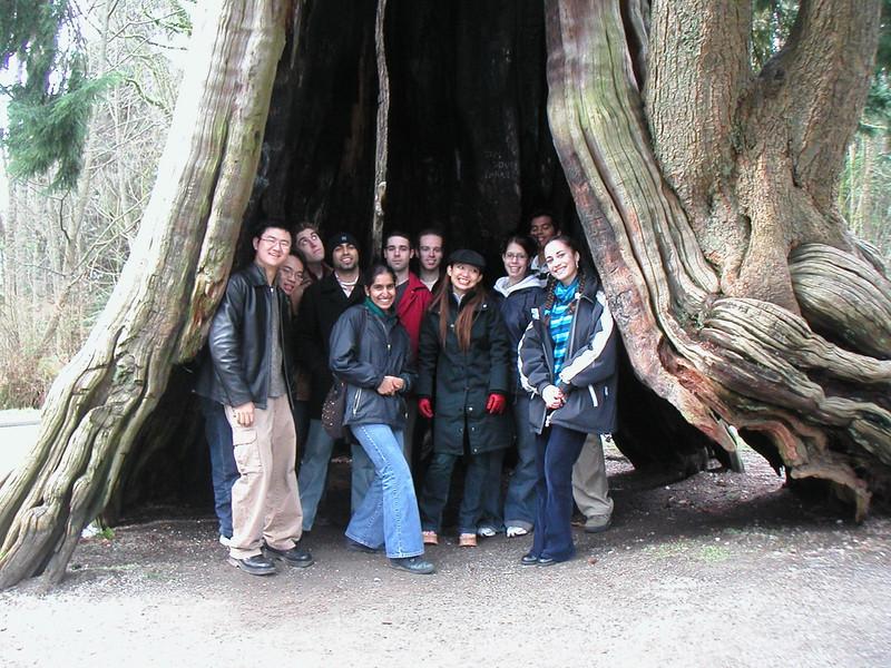 In a Tree.jpg