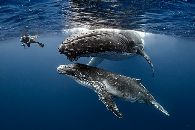 Photos:  Swim w/Humpbacks in Tonga