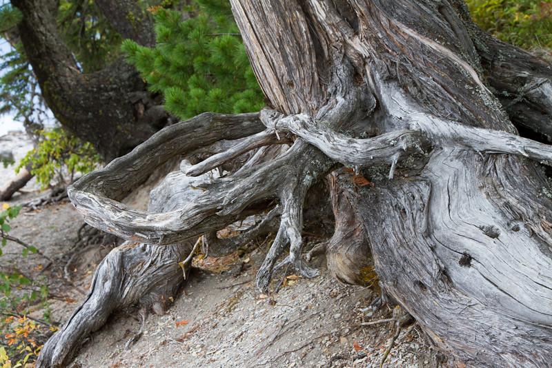 01_Glacier National Park_Montana-60.jpg