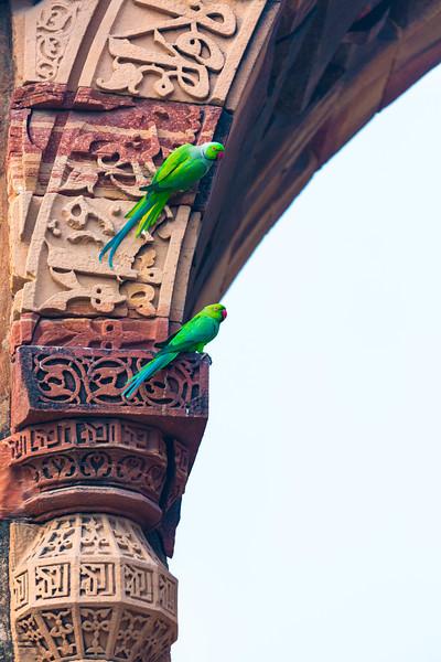 India-267.jpg