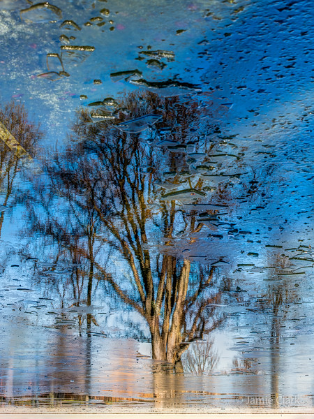 Reflecting Pool Trees