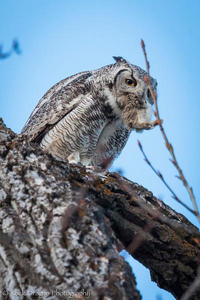 Owl-20.jpg