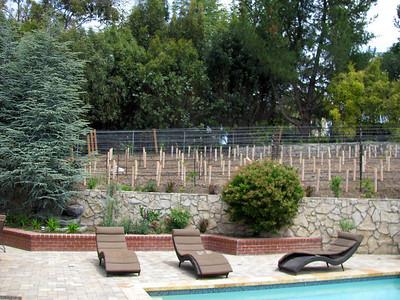 Saratoga Vineyards