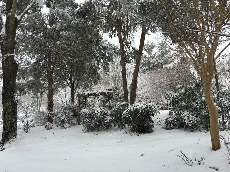 A view to the Garden Room and the Acoma  lagerstroemia indica on right