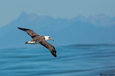 Albatrosses,Petrels,and Shearwaters