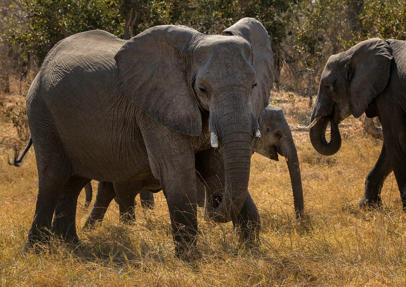 2014-08Aug-Okavango Masters-69-Edit.jpg