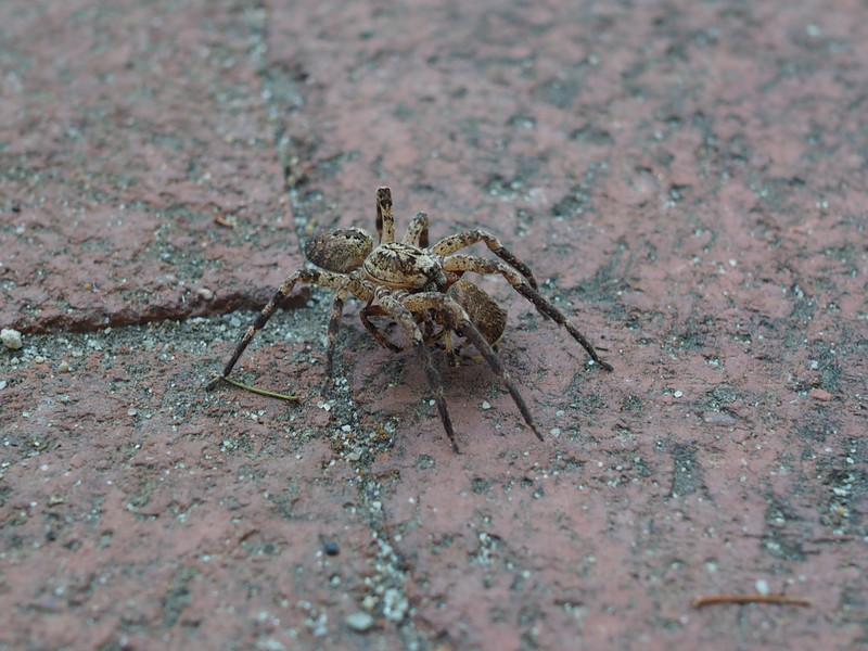 20131012_Spider_69.jpg