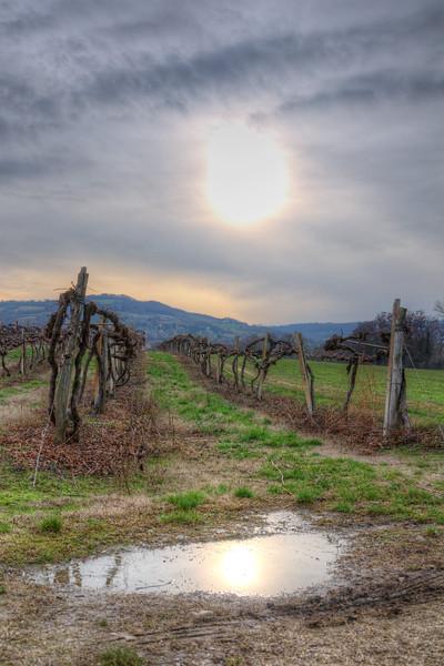 Vineyard - Albinea, Reggio Emilia, Italy - December 18, 2011