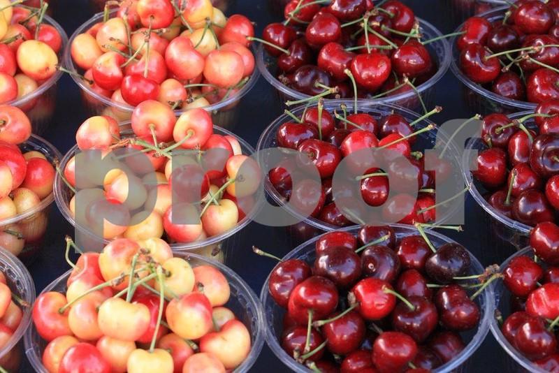 Cherries 4 sale 8639.jpg