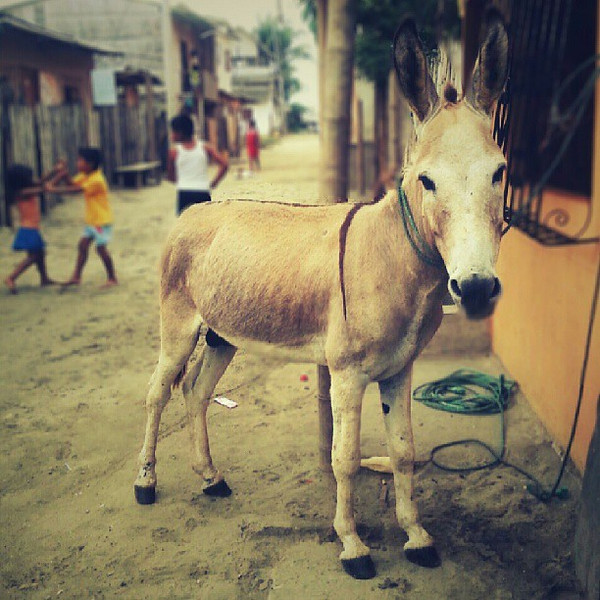 I_don_t_know_what_it_is_about_donkeys_but_they_always_make_me_laugh__how_about_you.jpg