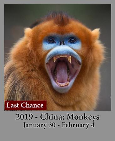 01-30-2019 China: SnubNoseMonkeys