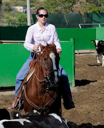 Team Penning Photos | SDCTPA April 19 Sorting Competition