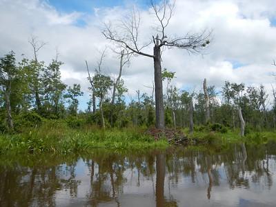 Mattawoman Creek 7-13-13