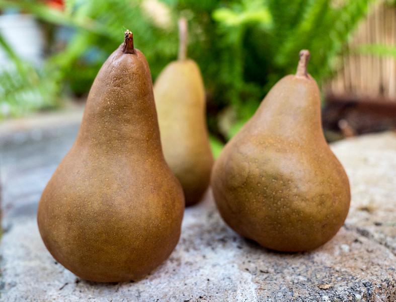 pears18.jpg