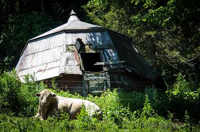 Ox Kill - Around the Farm