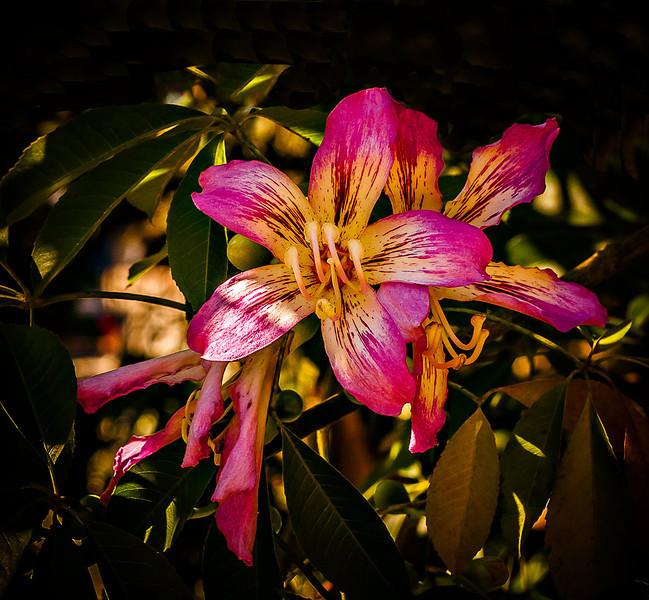 Flowersusf_0024.jpg