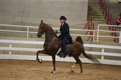 15. ASB Five Gaited Open