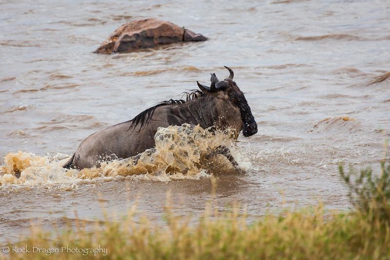 North_Serengeti-60.jpg