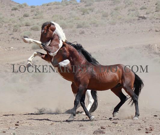 Nevada Mustangs July 2021