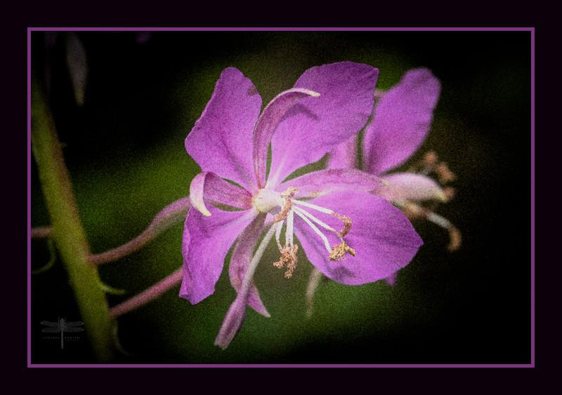 PinkFlower_664A6065.jpg