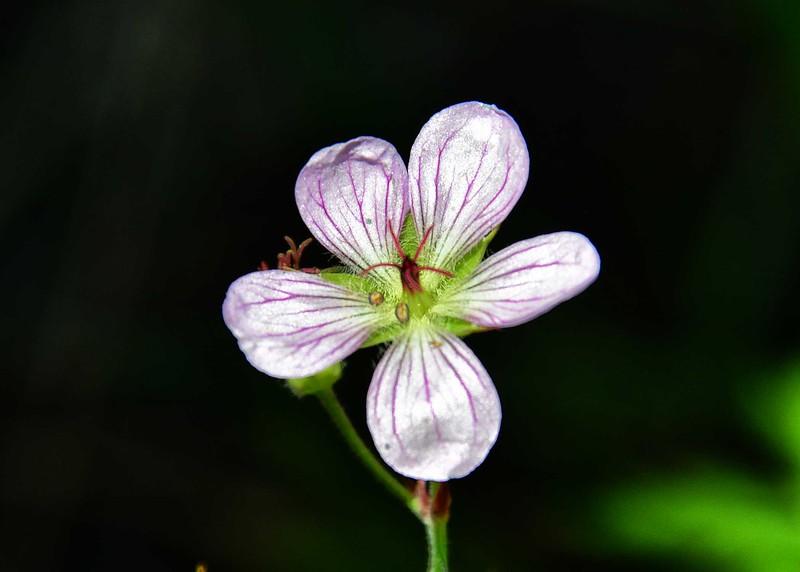 NEA_0357-7x5-Flower.jpg