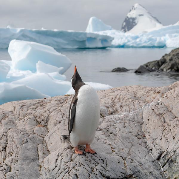 2019_01_Antarktis_03240.jpg