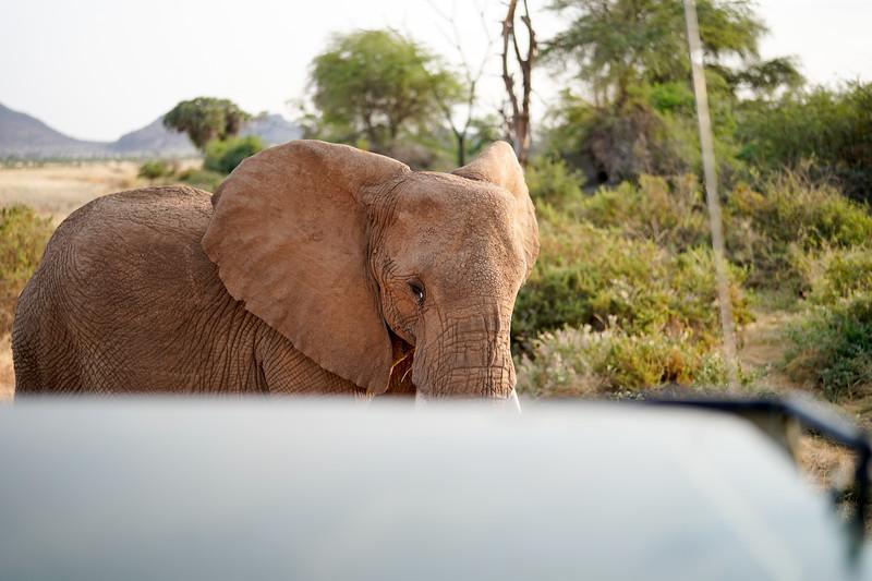 safari-2018-21.jpg
