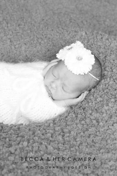 Lauren Fammatre   Newborn