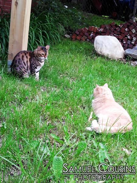 Stand-off (lie-off?) in my backyard.