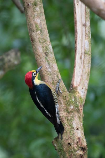 19-Sept Brazil Birds-7597.JPG