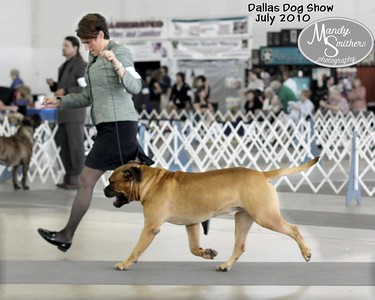 2010 July Dallas Dog Show