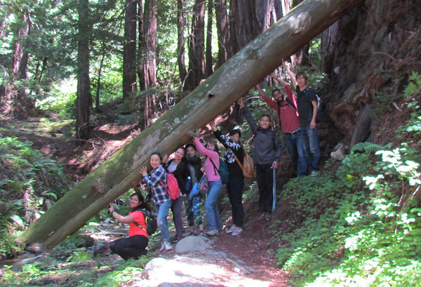 Hidden Redwood Forest Hikes