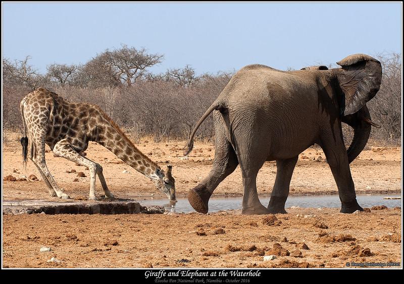 Giraffe and Elephant at the Waterhole