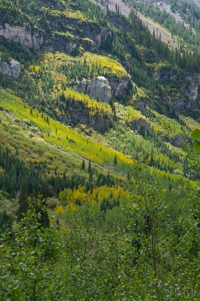 Aspen changing colors