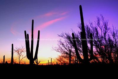 020-cactus_sunset-19mar04-0203
