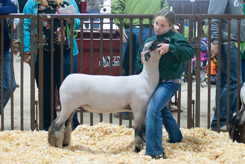 kay_county_showdown_sheep_20191207-42.jpg
