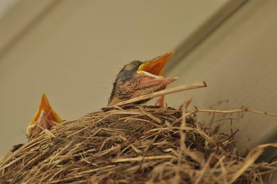 New Birdies!