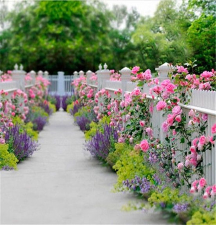 Outdoor flowers & fence