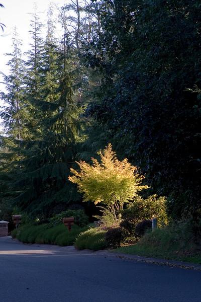 Highlighted Tree.jpg