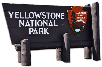 MINIs Go To Yellowstone