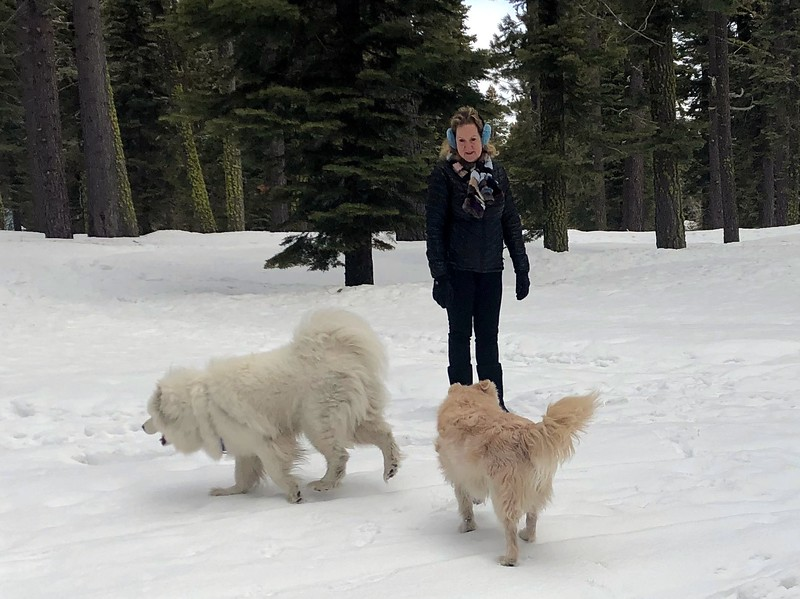 2019-03-21-0018-Trip to Tahoe with Dogs-Lake Tahoe-Debby-Teddy the Dog-Leo the Dog.JPG