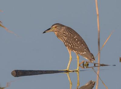 Birds of Shanghai