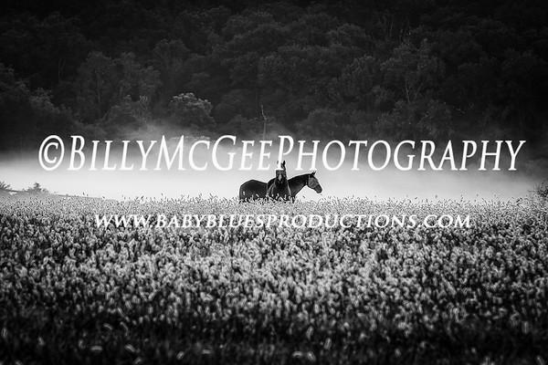 Horses and Barns - 15 Sep 2013