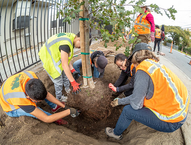 Oct 19 Canopy Tree Planting at Belle Haven school