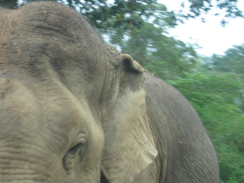 Sri_Lanka17-9603.jpg