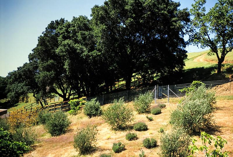 1991-1992 Building 111 Vaca Creek Way-109.jpg