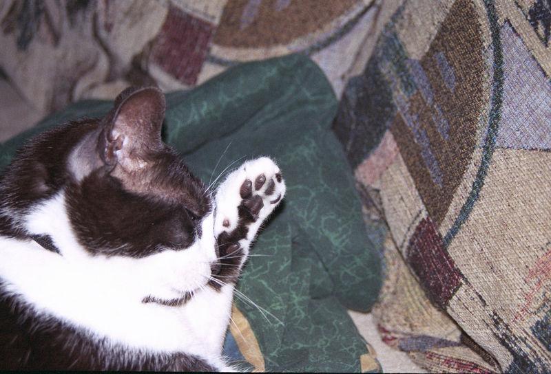 2003 12 - Cats 20.jpg